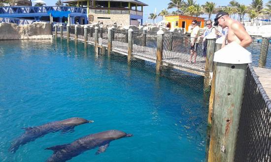 Ocean world adventure park and casino motel cherokee nc near harrah s casino