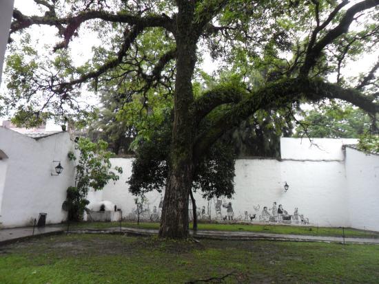 casa historica de tucuman patio trasero jardn con rboles aejos