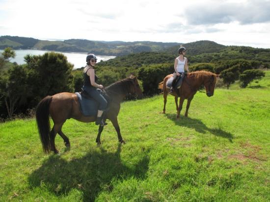 Pulau Waiheke, Selandia Baru: horses on the hill