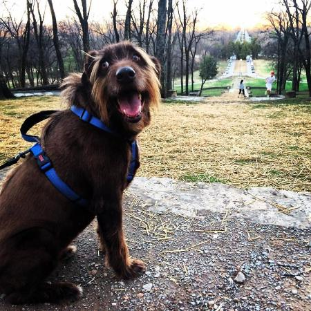 Edwin and Percy Warner Parks: Take your dog for a walk through the woods