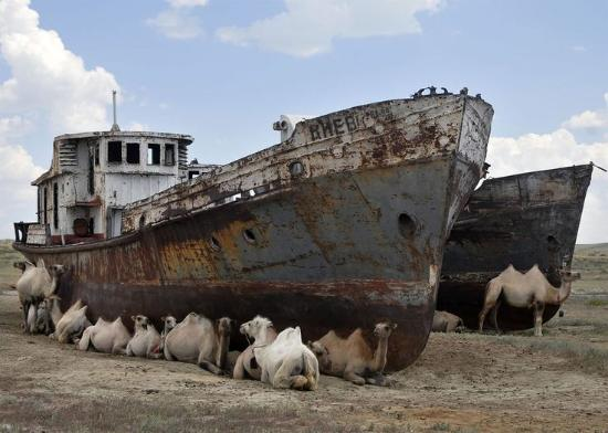 The Regional History and Aral Sea Museum