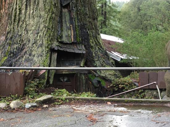 photo1 jpg picture of world famous tree house piercy tripadvisor rh tripadvisor com