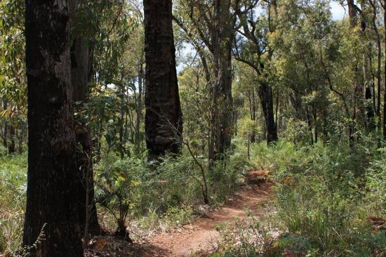 Kalamunda Mountain Bike Circuit