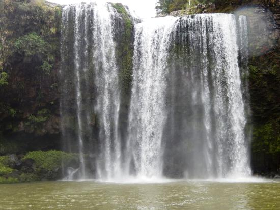 Whangarei Falls from bottom