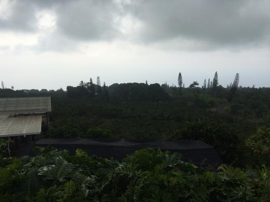 Heavenly Hawaiian Farm : ラナイからの景色。残念ながら雨。