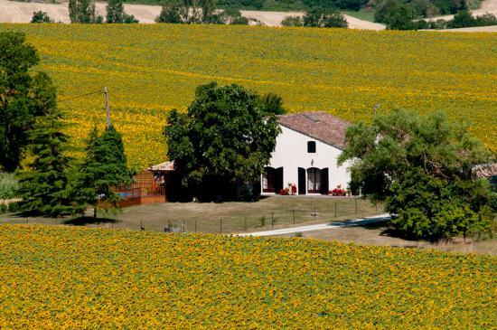 Grand Pailley Bas : Gite amongst the Sunflowers