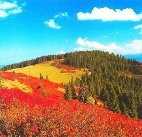 Giresun Province, تركيا: Mükemmel doğası ile harika bir yayla