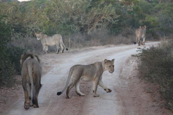 HillsNek Safaris, Amakhala Game Reserve: Early morning stroll