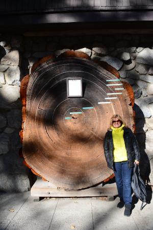 Valley Visitor Center: Sequóia