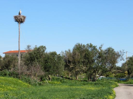 Casa Flor de Sal: Grounds and whte storks nesting