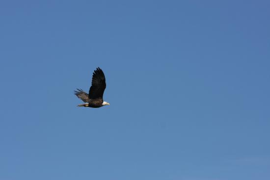 Monetville, Canada: Great view of an eagle from our boat