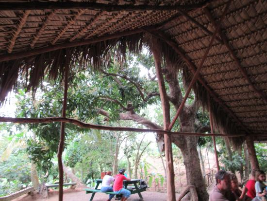 Bayahíbe, República Dominicana: The lunch area after the river cruise
