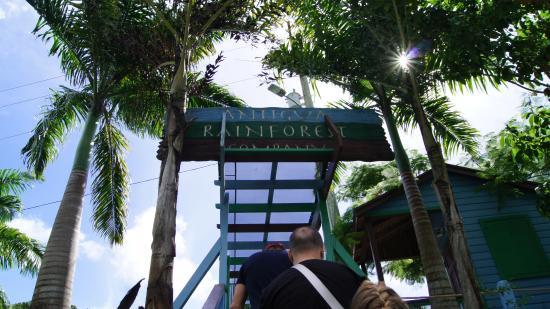 Antigua Rainforest Canopy Tour: La entrada, a la aventura