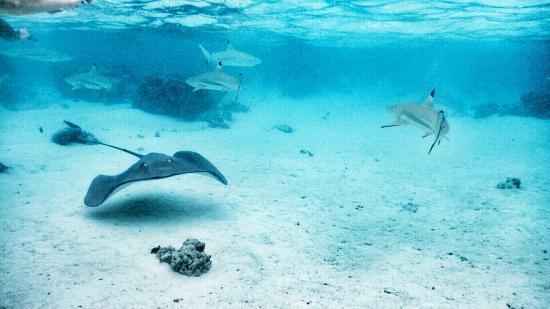 Moorea, Polinesia Prancis: DSCN0526-01_large.jpg