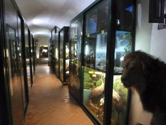 Villa Baciocchi: corridoio Museo Archeologico