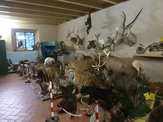 Villa Baciocchi: sala Museo Archeologico