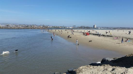 dog beach picture of ocean beach dog beach san diego tripadvisor rh tripadvisor co nz  beaches in san diego with a pier