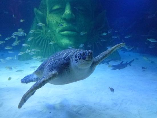 ... _large.jpg - Picture of Sea Life Manchester, Stretford - TripAdvisor