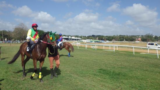 Barbados Turf Club: Beautiful horses