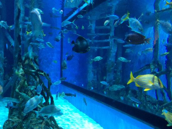 Rumfish Grill The Aquarium Tank