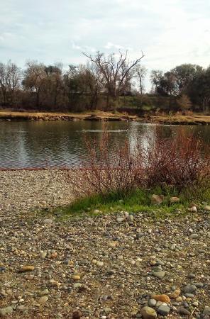 Ancil Hoffman Park: Serene view