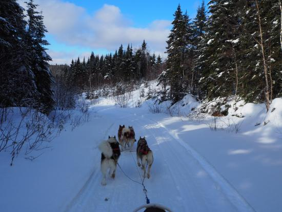 OrganisAction - Quebec Off The Beaten Track: chiens de traîneau