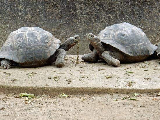 Puerto Villamil, Ecuador: Galapagos schildpadden