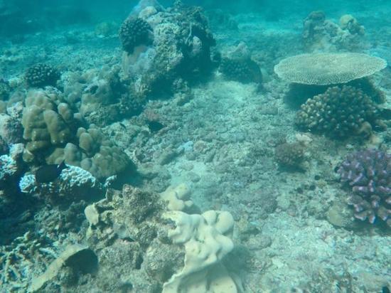 Bazaruto Archipelago, โมซัมบิก: Snorkeling
