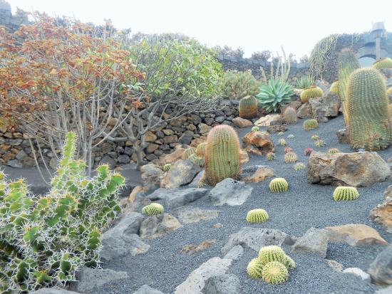 Flowering cactus - Picture of Jardin de Cactus, Guatiza - TripAdvisor