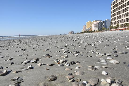 Best Beach In South Carolina To Find Shells