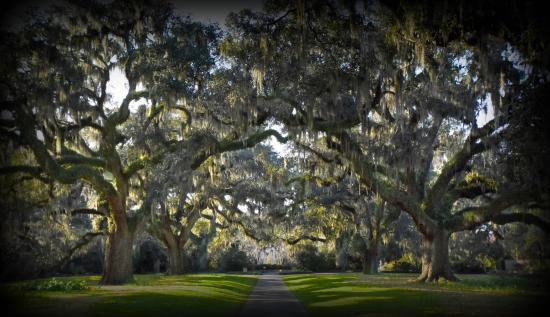 Brookgreen Gardens: Mossy Oaks
