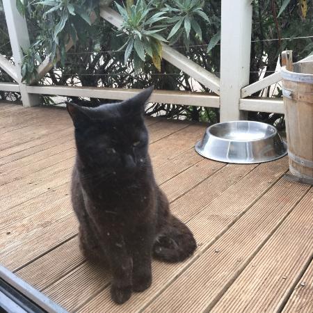 Tasmania, Australia: Resident cat