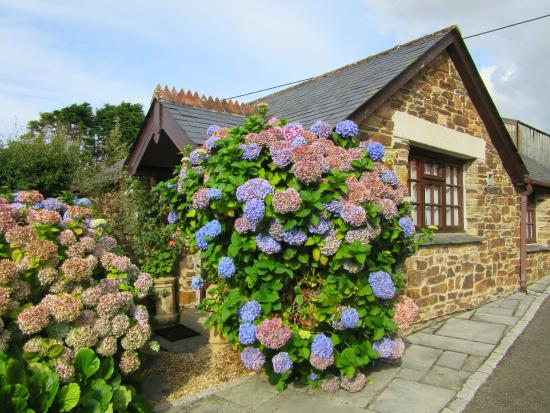 Hendra Paul Cottages: Wild Flower Cottage - so so cute!