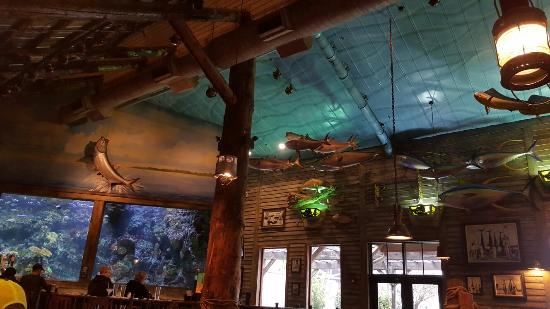 Indoor Waterfall Aquarium Bass Pro Shops Picture Of