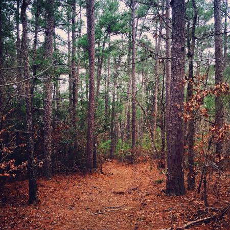 Wildersville, TN: photo7.jpg