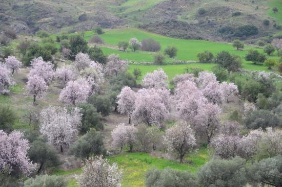 Paphos District, Siprus: landscape