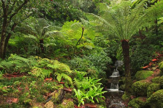 jardines del palacio de montserrate sintra portugal