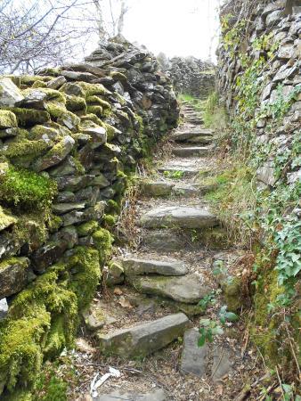 سنترال جيست هاوس: just up behind the Central, you'll find moss & lichen covered walls 