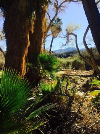 Palm Canyon Photo