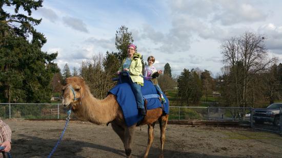 camel rides 6 picture of point defiance zoo aquarium tacoma rh tripadvisor co za