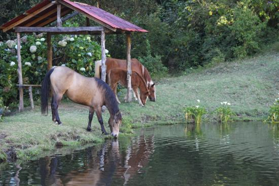 Lagunillas Lodge: Horses by the trout pond