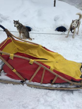 Aventure Reve Blanc: Deux jours chiens traîneaux