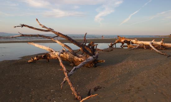 Tahuna Beach Kiwi Holiday Park and Motel: beach front to this beauty