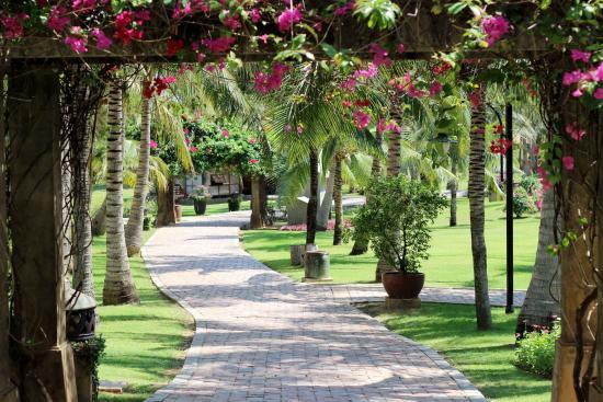 Pandanus Resort: Pandanus-Garden_3