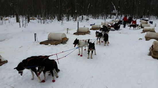 Nature S Kennel Sled Dog Racing And Adventures Mcmillan Mi