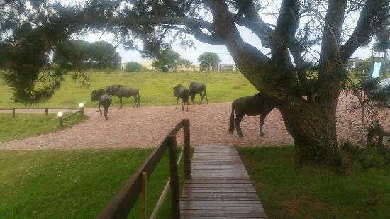 Kwelanga Country Retreat: 20160217_183505_large.jpg