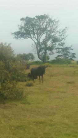 Kwelanga Country Retreat: IMG-20160217-WA0008_large.jpg