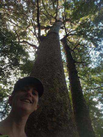 Whangarei, New Zealand: Very tall tree!