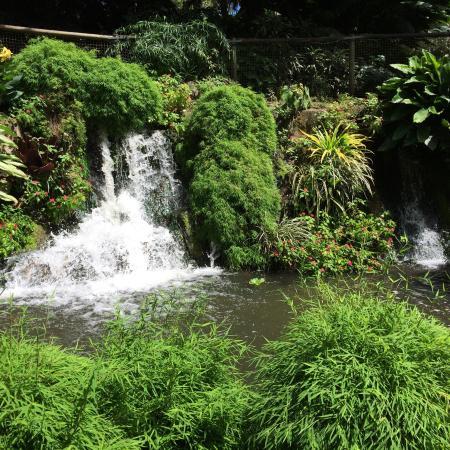 Picture of jardin botanique de deshaies for Jardin botanique deshaies