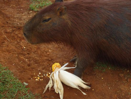 Sao Pedro do Butia, RS: Um dos muitos animais da propriedade com os quais é possivel interagir